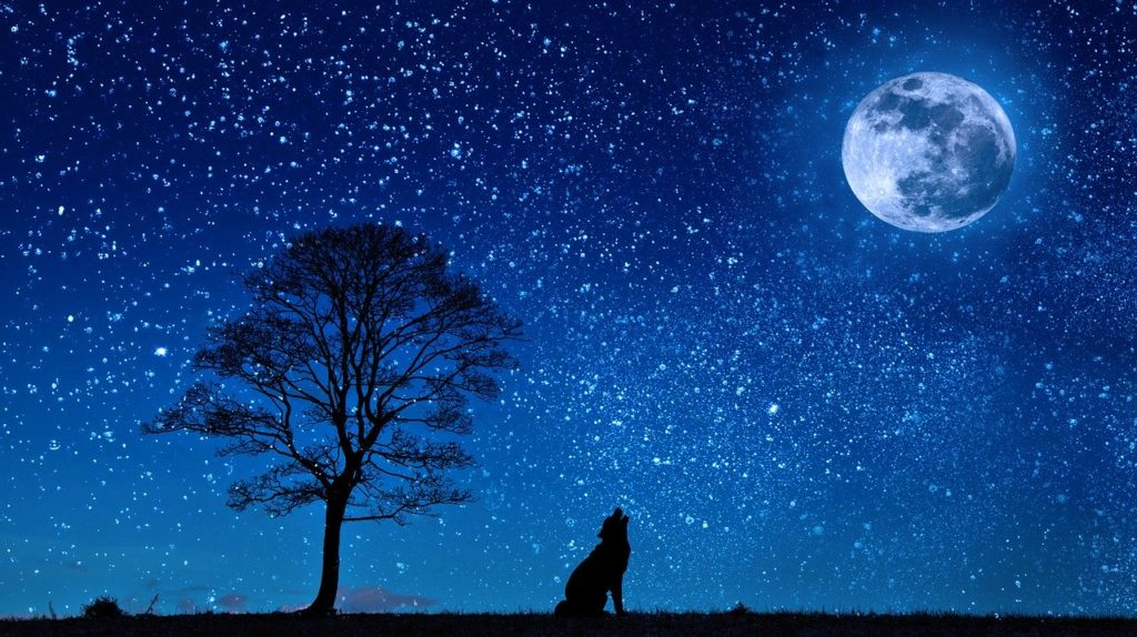 Pet dog howling at the stars
